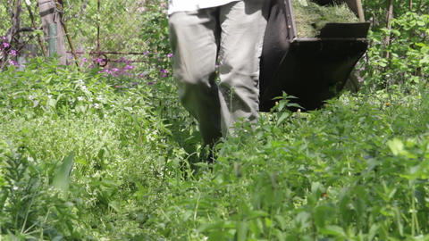 Gardener carrying a basket full of grass clippings after trimming a portion of t Footage