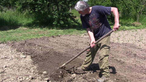 Gardener digging the ground. After the soil is dug, the gardener uses a rake to  Footage