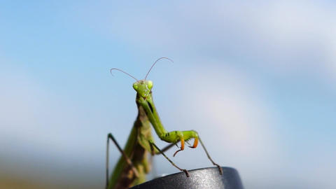 Mantis on the sky background Footage