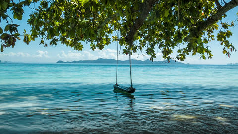 Green tree with lonely swing and sea Footage