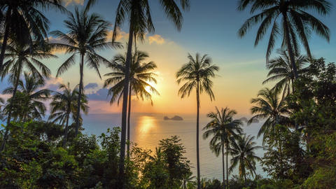 Tropical sunset with palms time lapse Archivo