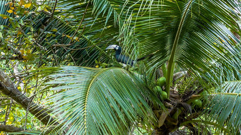 Tropical bird on palm tree Footage