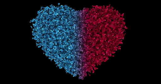 Romantic Red Blue Rose Flower Petals In Heart Shape Alpha Matte Loop 4k Animation
