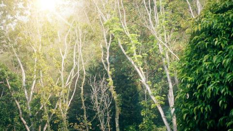 Sun Shining Through Trees Filmmaterial