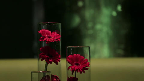 Red flowers in glasses Footage