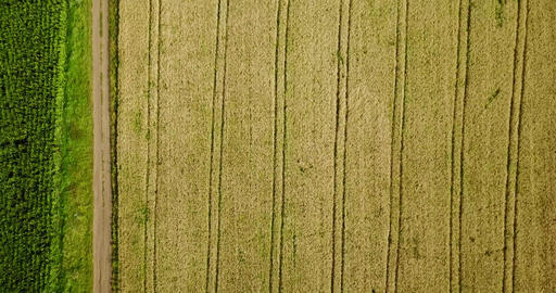 Aerial Drone View Of Straight Lines In Farm Plantation Field Footage