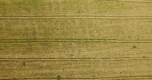 Aerial Drone View Of Straight Lines In Farm Plantation Field Live Action