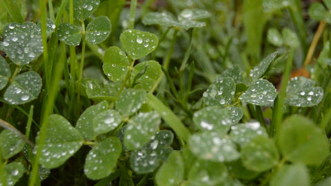 Drops On Grass Live Action