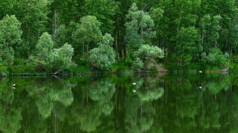 Forest on bank of river is reflected in the water Footage