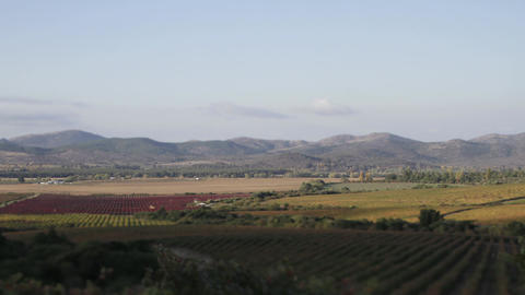 Wine plantations with mountains Footage