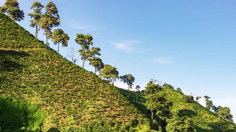 Time Lapse of a Coffee Farm Footage