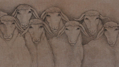 Sheep herd drawing Footage