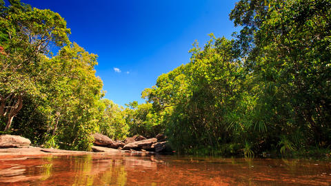 Transparent Pond above Brown Stony Bottom in Tropical Forest Footage