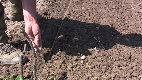 Gardening put seeds to get vegetables in the fall. He stretch a rope right to pl Footage