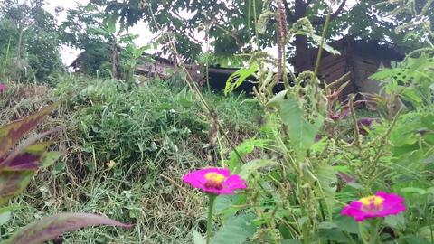 Mountain village-Thailand 19 Filmmaterial