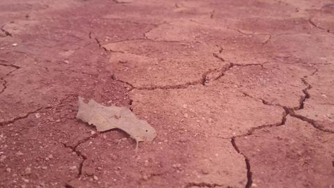 Thailand-Golden Triangle 3 動画素材, ムービー映像素材