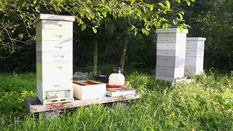 Beehives in a Garden Filmmaterial