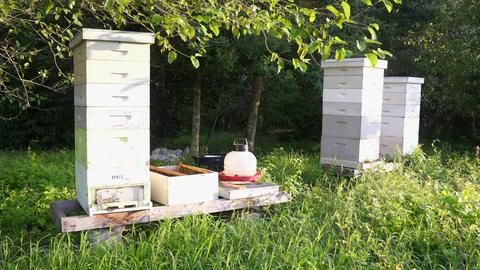 Beehives in a Garden Filmmaterial