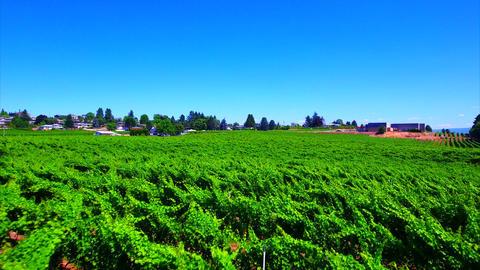 Kelowna Winery footage 6 Footage