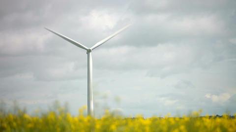 Wind Turbine In Field Of Oilseed Rape Footage