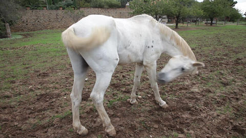 White horse Footage