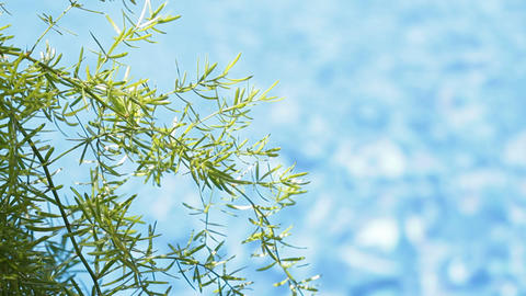 Green leaves and water background 画像