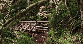 Snowing on a manmade timber bridge in a tranquil forest Image