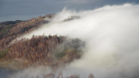 One Cold Morning Autumn Mist Rises Over The Forest. It Is A White Mass That Surr stock footage