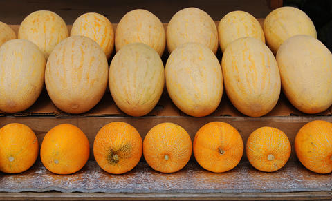 Melons are yellow フォト