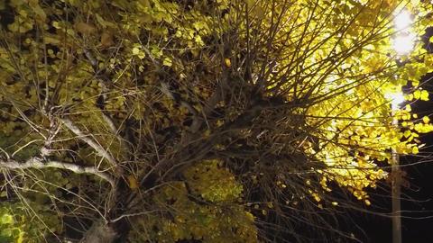 Big Yellow Tree In The Night Footage