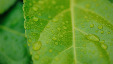 Young Leaf With Rain Drops ビデオ