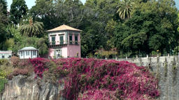 Portugal Madeira island Funchal quay wall with a cliff and many pink flowers Footage