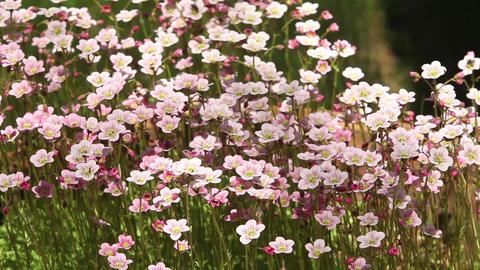 flowering bright flowers background Footage