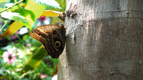 Butterfly on tree 影片素材