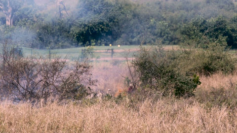 A man burning a field next to a golf course with flames and smoke Footage