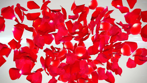 Red roses petals in the form of heart fly away Animation