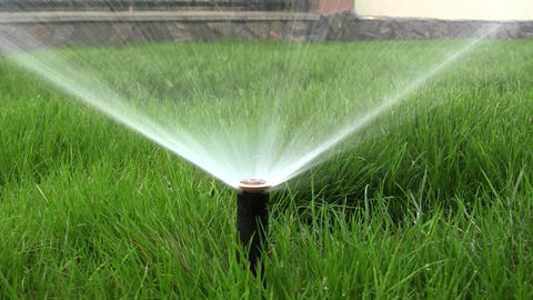 Sprinkler irrigation plant in the garden. The grass is green and beautiful, she  Footage