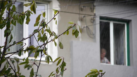 The sound of rain. A heavy rain and strong wind in the garden. Branches of trees Footage