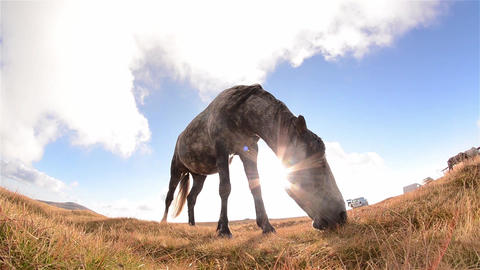 White Horse With Black Spots, At Grazing On Alpine Grassland With Dry Grass 4 stock footage
