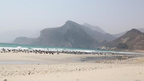 birds and coastline 001 Footage