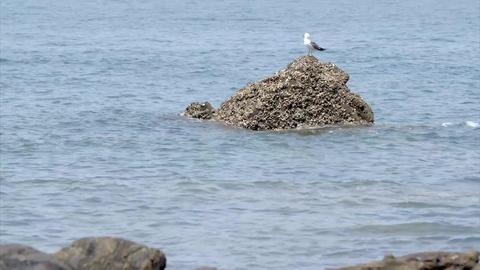 seagull, sky, sea Image