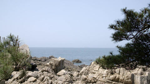pine tree, rocks, sea Image