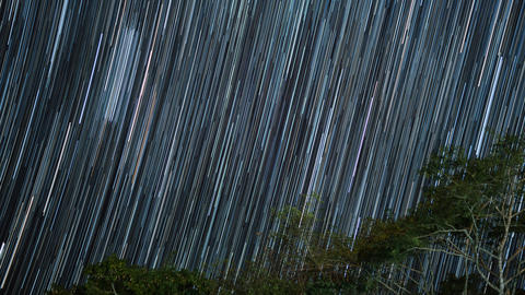 Star trails in the night sky with tree Photo