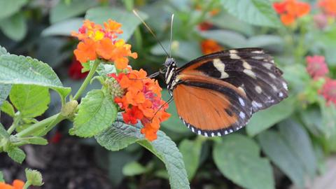 Monarch Butterfly Filmmaterial