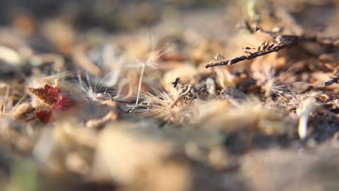 Ant work close up Footage