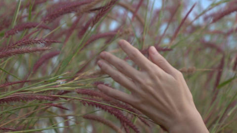 Hand Woman Touching On Grass Slow Motion Footage