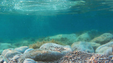 rocks and seaweeds seen from underwater, adriatic sea Footage