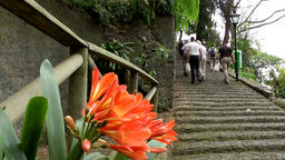 Portugal Madeira orange amaryllis flowers and stairs in village of Monte Footage