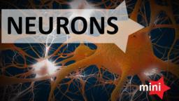 Neuron 3D Modell