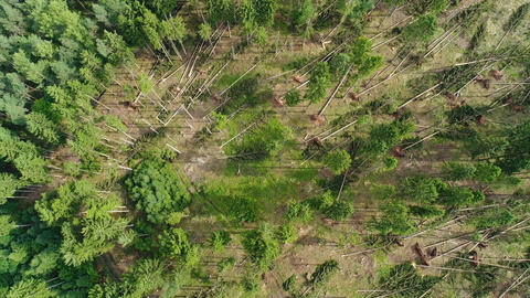Storm damage, forest - aerial view Live Action
